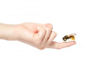 picaduras por himenópteros (abejas y avispas)