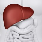 Hígado
